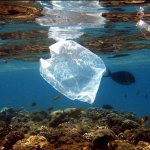 EPA Mismanaged $40 Million In Grants To Kill Snails, Ban Plastic Bags