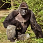 The Philly Zoo wants you to name its gorilla…but not Harambe