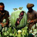 US Spent $8.5 Billion Fighting Narcotics, Afghanistan Set New Opium High