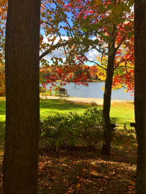Beach through the trees (photo by Jane Emmer)