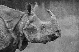 Rhino true self systems