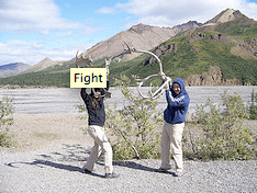 Fighting with Caribou Antlers
