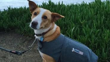 dog anxiety vest