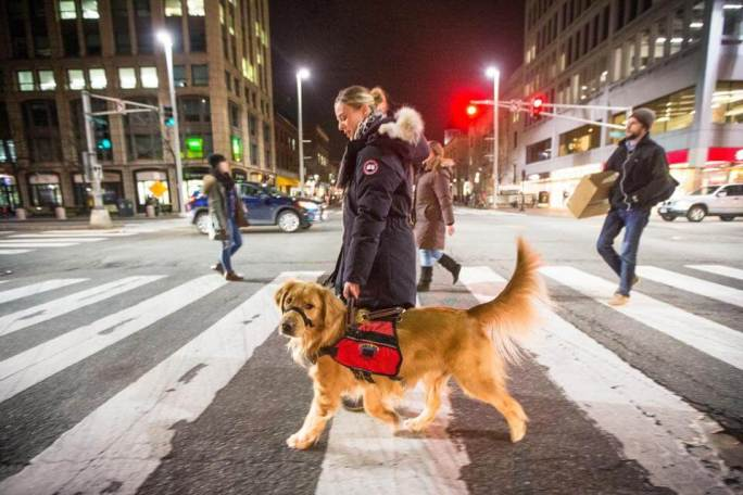 anxiety service dog in street