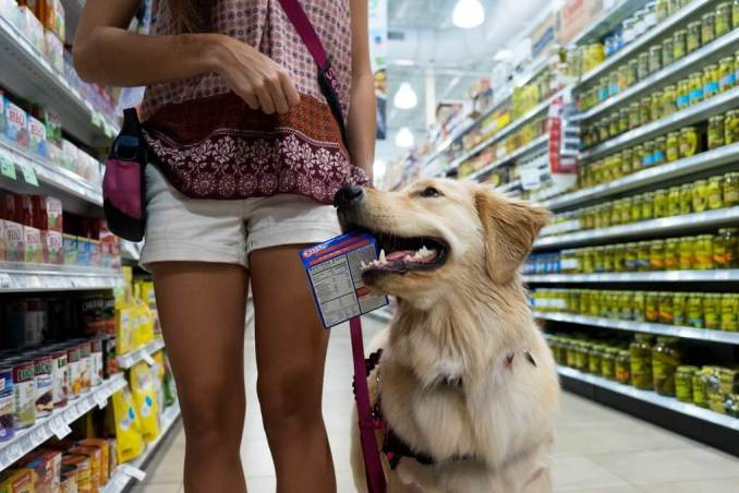 service dog in store