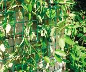climbing plant mesh
