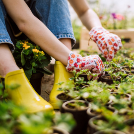 Green thumb on a budget! Gardening pros share their favorite tips for saving money on yoursummer gardenupgrades. Gardening on a budget has never been easier! #gardening #gardeningtips #savingmoney #howtogarden #gardening101 #summergarden #gardeningforbeginners #howtosavemoney #moneytips #gardeninghacks