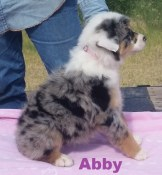 Abby 8 weeks