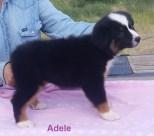 Adele 8 weeks