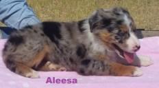 Aleesa 8 weeks