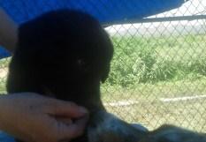 M2 BlackBear 9 weeks