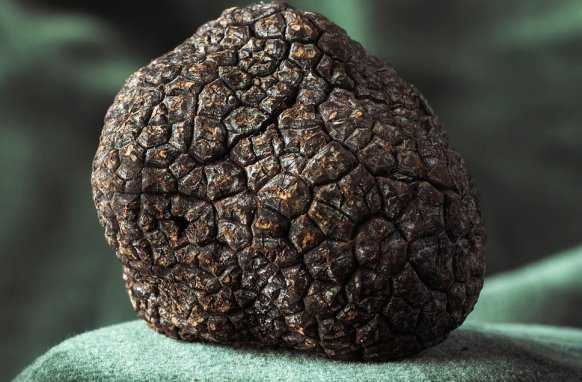 How Much Are Truffles Worth THE TRUE PRICE OF LUXURY
