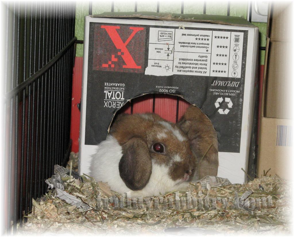 All snuggled up in the FujiXerox hiding box - LOL!