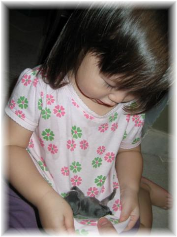 I learned this trick from Alicia of Pet Epicure on how to teach young children to hold small animals