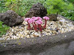 Why Hypertufa and Succulents? (2/4)