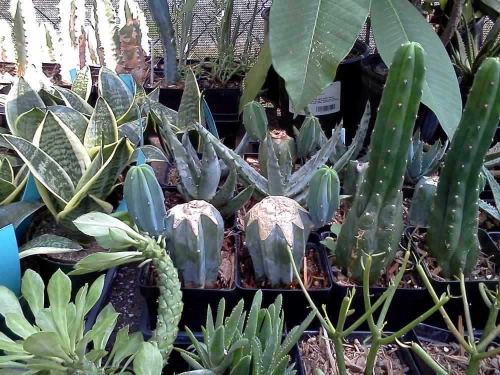 Austin delivers Succulent-astic! (4/6)