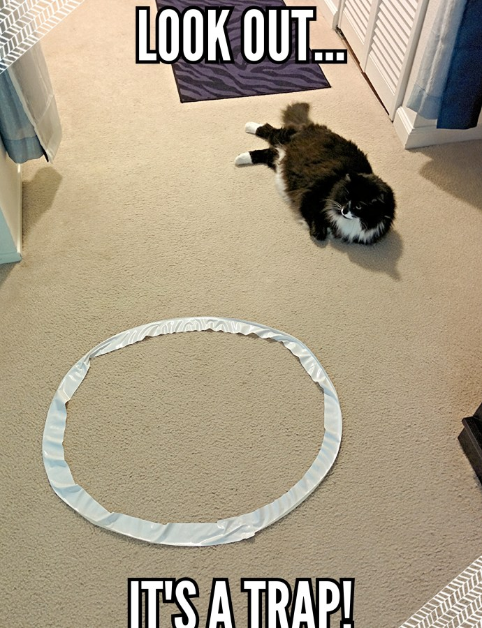 How I feel about Cat Circles…