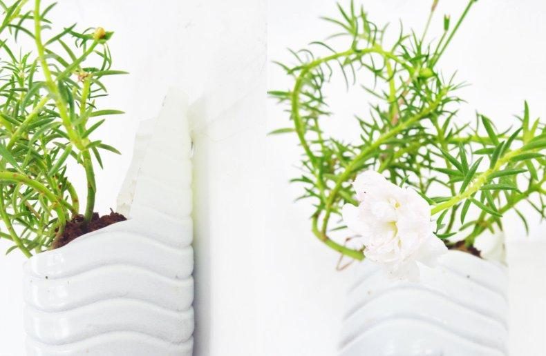 Collage_plastic bottle planter