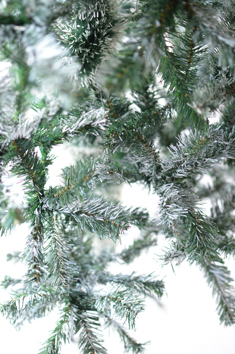 closeup-snow-flocked-tree