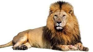 Lion Poem