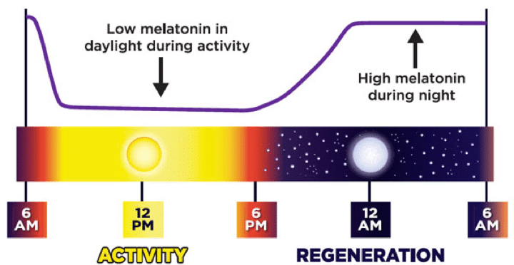 How melatonin works and why it helps you fall asleep
