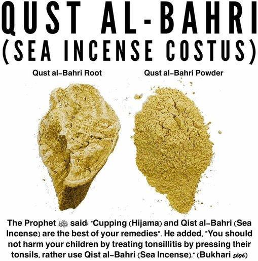 Marine Costus (Sweet) - Qust al Bahri - Sea Incense Costus - Qust e Shireen - Saussurea Lappa Clarke - Trust The Herb