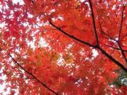 Soul of Sakura ^.^