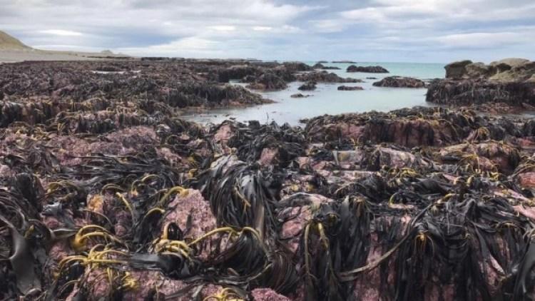 nouvelle zélande fond marin surface
