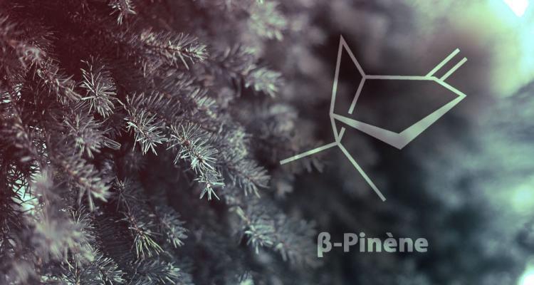 creer plastique pinene sapins molecule