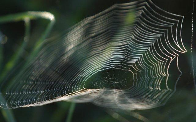 soie araignée antibiotique pansement