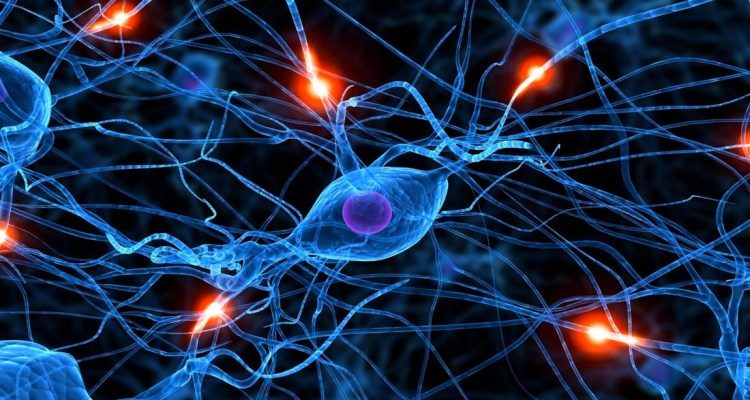 neurone synapse cerveau maladies communication