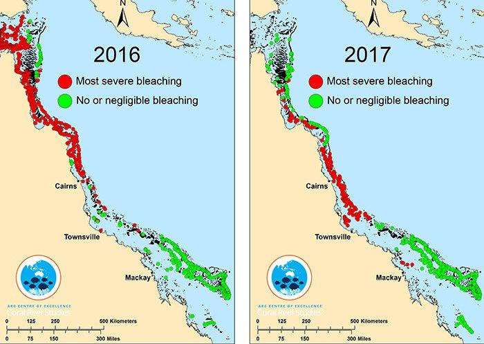 blanchissement corail phase terminale