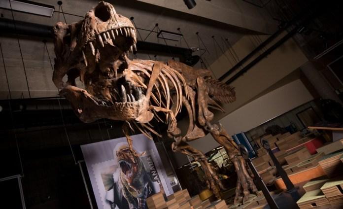 trex dinosaure tyrannosaure rex