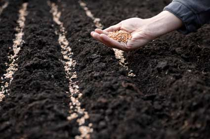 21 Seeds of Trust - If you don't sow it, you can't grow it!