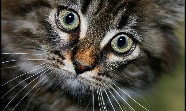 cat55