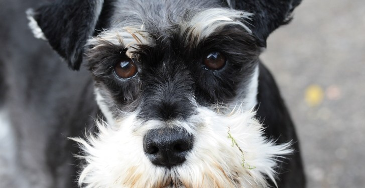 Are the combination chewable heartworm/flea/tick medications