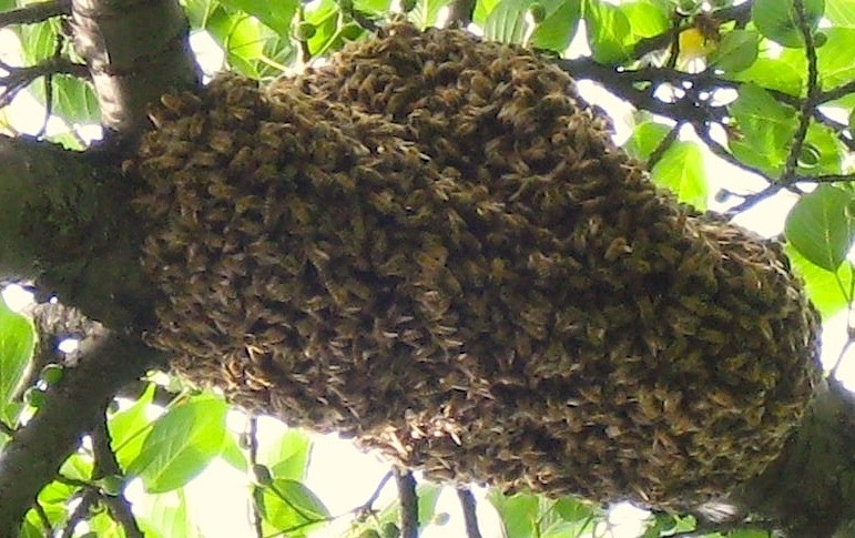 bees-2