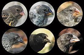 Darwin's finches 2