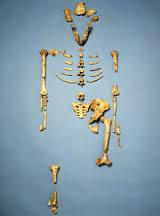 Lucy's bones