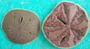 Similar fossils 1