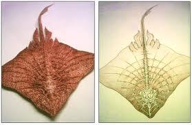 Similar fossils 3