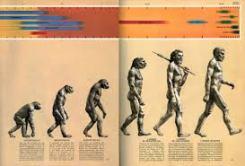 ascent of man chart 1