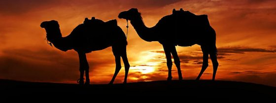 """""""A PLACE FOR THE CAMELS"""" (Genesis 24:31b): Refuting the Claim That There Were No Domesticated Camels in the Holy Land at the Time of the Patriarchs"""