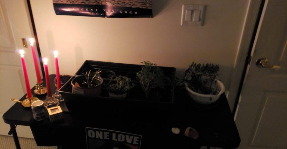 replants flowers next season