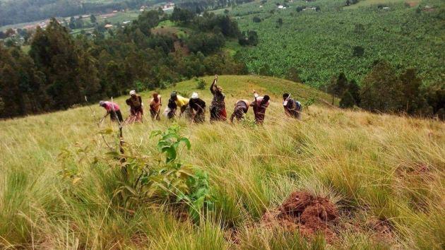 green uganda 1 million trees