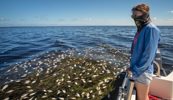 achael Pyle, who recently moved to Florida, looking out over a fish kill that stretched for miles off North Captiva Island.