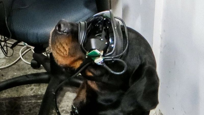 goggles for combat dogs