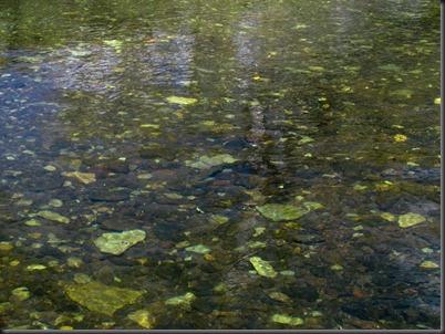 clear water, Bokspruit-1
