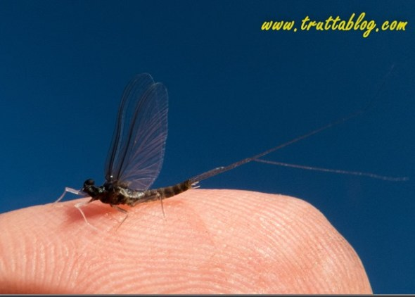 BWO (1 of 1)-2