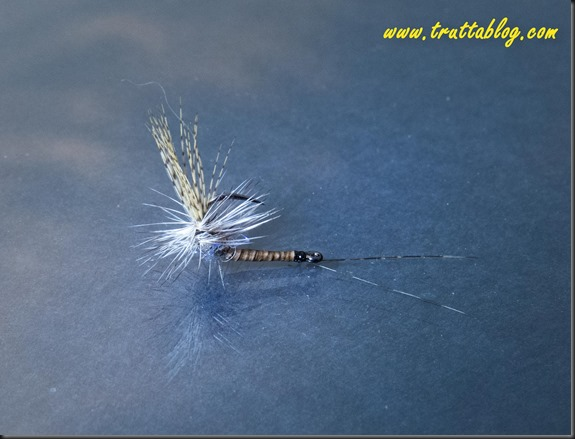 Reverse dry flies (1 of 1)-4